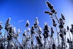 I Need Perspective (in the winter) (Neil B's) Tags: pg peter gabriel winter blue snow trees perspective need
