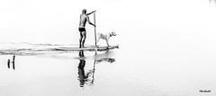 Parceiros (mariohowat) Tags: brazil blackandwhite bw blancoynegro monochrome brasil riodejaneiro natureza pb animais pretoebranco saquarema