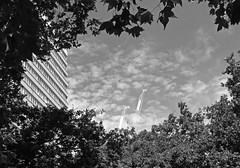 Blots on the landscape (surreyblonde) Tags: bw blackandwhite monochorme black grey canon g15 trees nature cranes buildings sky clouds london londonskyline