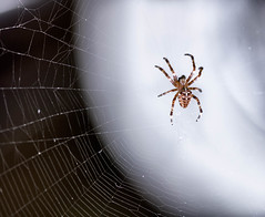 Creepy Crawlies (cuppyuppycake) Tags: spider summer time creepy crawlies web insect nikon d7200 outdoor scary