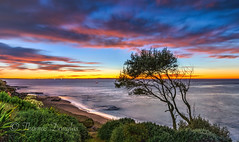 Dawn The Point Cronulla Sydney (600tom) Tags: dawn point tree silhouette pink clouds beach rocks ocean water sydney australia bushes green
