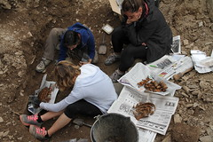 Exhumación Castroncelos (Lugo) (11)