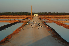 faro: salinas (Marek K. Misztal) Tags: portugal portugalia faro algarve riaformosa salinas birds seagulls