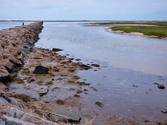 At the Breakwater (mahler9) Tags: june 2016 mahler9 jaym provincetown capecod massachusetts breakwater moors landsend newengland