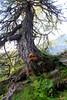 Haute Route - 9 (Claudia C. Graf) Tags: switzerland hauteroute walkershauteroute mountains hiking