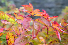 Autumn 2016-8 (Lynne 1212) Tags: buckland abbey autumn x100t