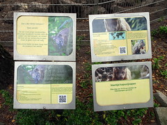 best_069 (OurTravelPics.com) Tags: best explanation south american coati tufted capuchin bestzoo
