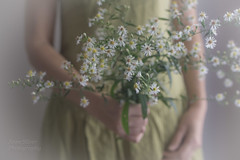 innocence (l'imagerie potique) Tags: limageriepotique poeticimagery wildflowers fleurssauvages mouvement pretty joli innocent ethereal
