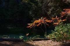 autumn sumacs (thatgirlwiththekicks) Tags: crowelake ontario canada trees nature green sumac pond ironore autumn fall log house dogs pals friends blue sky sunny afternoon