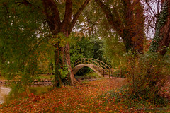 Autumn path . (rudi.verschoren) Tags: autumn path nature natuur water bridge belgium brown red yellow trees green antwerp antwerpen rivierenhof park fishing pond visvijver eos ngc europa cascade 18135mm landscape landschap light outdoor