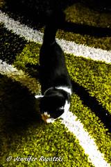 Rufus as he sneaks onto the carpet (Bernsteindrache7) Tags: autumn panasonic lumix light green indoor home house cat animal pet white black