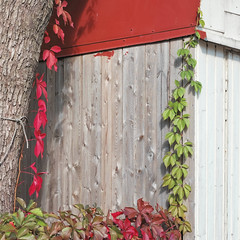 Red vs Green (Jani M) Tags: street urban red green plant leaf leaves corner wall square
