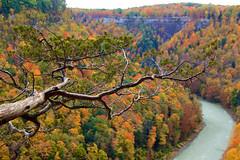 Out on a Limb (Sarah Sonny) Tags: fall autumn leaves colors landscape upstateny fallcolors falltrees gorge hills river stream water tree bare branch colorful