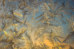 Frosty Window at Sunrise (PhotoJacko - Jackie Novak) Tags: winter cold macro nature sunrise frost macroextensiontube frostywindow
