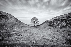 Sycamore Gap (Damon Finlay) Tags: longexposure 2 england blackandwhite bw white black monochrome wall canon silver landscape long exposure 10 gap collection northumberland stop filter sycamore northumbria pro nik efs 1022mm hadrianswall hadrians efs1022mm sycamoregap efex 60d nd110 canon60d bwnd11010stopfilter silverefexpro2 nikcollection