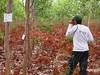 UTAD / GWD Forestry - forestry inspection/study (GWD Forestry - Brazil) Tags: brazil forestry investment gwdforestry