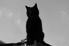 2704 Black (Nebojsa Mladjenovic) Tags: portrait blackandwhite bw pet france monochrome animal cat blackcat french eyes feline chat burgundy panasonic animaux bourgogne morvan yonne mladjenovic