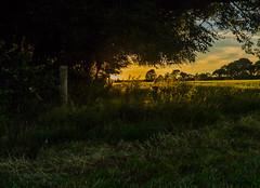 Toby`s Summer Walks (trevorhicks) Tags: trees sunset summer england canon devon fields tamron tavistock 700d