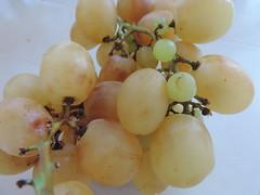 Natura morta (RoBeRtO!!!) Tags: autumn stilllife food white macro closeup fruit grapes bianca uva autunno cibo naturamorta rdpic nikonp520