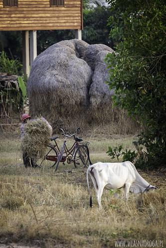 Khmerska codzienność