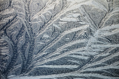 Eisblumen - fern frost (unkel.unterwegs) Tags: winter art frost blumen blau eisblumen fernfrost