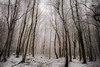 IMG_0968 (simongoode25) Tags: trees snow landscapes awesometrees