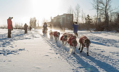 On the Quest (yukonchris) Tags: winter snow canada cold ice outside north yukon icefog northern whitehorse sleddogs intothesun yukonquest dogsledrace northof60 sleddograce southernyukon deepcold yukonrivervalley canon7d