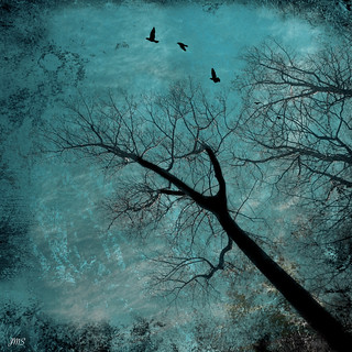 Silhouettes in a Turquoise Sky ©
