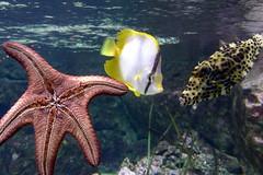 Aquarium de Paris  (24) (Mhln) Tags: paris aquarium requin poisson trocadero poissons meduse 2015 cineaqua