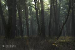 Dark forest (lg-photographic) Tags: forest dark twilight edited surreal swamp moor wald dunkel unwirklich groser bullensee