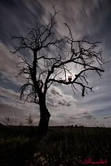 Edgar Allan Poe Inspiration (jrandet) Tags: jrandet fotografianocturna fotografiacreativa largaexposicion nocturna nubes arbol buho terror edgarallanpoe
