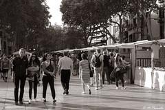 012806 - Barcelona (M.Peinado) Tags: monocromtico blancoynegro byn blackandwhite bw larambla lasramblas lesrambles barcelona provinciadebarcelona catalua espaa spain 17062016 juniode2016 2016 canoneos60d canon copyright