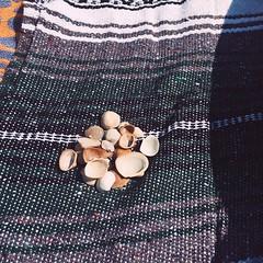 sandy (subsidium) Tags: seashells sand beach vsco iphone