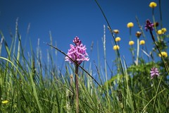 orchid (alexhaeusler) Tags: view perspective wild life orchid nature
