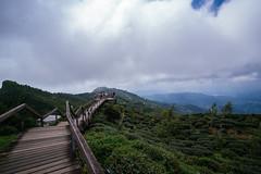20160716-DSCF2068 (chris_peng) Tags: 大崙山觀光茶園
