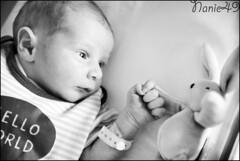 Elliot3, 4 jours. (nanie49) Tags: france francia bb baby nouveaun newborn reciennacido nanie49 nikon d750 portrait retrato bn nb