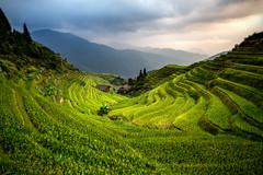IMG_6116_edited-1 (Lauren :o)) Tags: china travel sunset green clouds landscape rice riceterrace longji travelphotography pingan dragonsbackbone longjiriceterraces