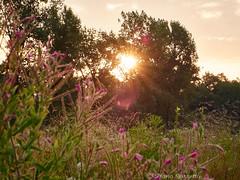 _S197358657 (Rosshox) Tags: naturalphotography natura wildlife action animals animali fujifilm fujifilmxs1 volatili