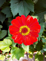 Flower (george.postoronca) Tags: ifttt 500px nature flora no person summer leaf garden flower color petal floral beautiful outdoors decoration