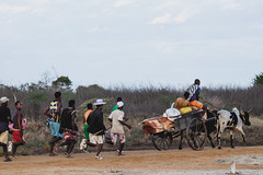 Funeral procession near the twin baobab - casket is in the cart