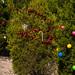 Trees_of_Loop_360_2014_036