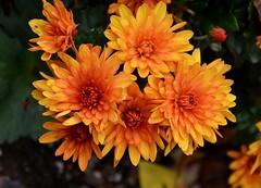 Have You Met Me Mum (thoeflich) Tags: street ohio fallcolors front autumncolors marietta muskingumpark
