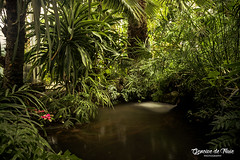 Winter jungle (GencivedeTruie) Tags: life longexposure flowers trees winter fish paris france tree nature water fountain pond indoor conservatory greenhouse jungle tropical wilderness fishes serre auteuil