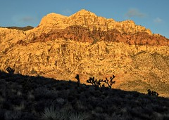 Early sun in Red Rock Canyon (Patty Bauchman) Tags: nature landscape lasvegas nevada redrocks redrockcanyonstatepark earlymorningsun