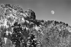 Endless Winter Nights (creyesk) Tags: trees winter sunlight moon snow mountains alps woods pines neuschwanstein alpsee