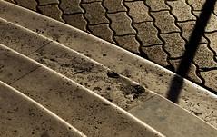 Armonia di linee - Harmony of lines (BribbroPhoto) Tags: shadow abstract italia floor ombra steps line astratto linea lazio pavimento gradini civitavecchia canonef135mmf2lusm canoneos6d