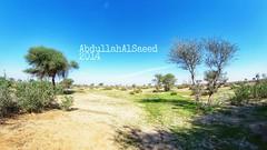 #colorful #hdr #nature #photography #panorama #landscape #_ #  #tree # # # #ksa  #SaudiArabia #AbdullahAlSaeed #PicsArt #instashot #nocrop #goodevening #good_evening #_ #sun # # #  #world #2014 #_ (photography AbdullahAlSaeed) Tags: world panorama sun tree nature landscape photography colorful  nocrop saudiarabia hdr  ksa 2014  goodevening     instashot   picsart   abdullahalsaeed