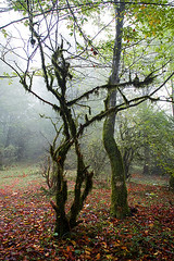 Fall Leaves Under Dancing Tree (shumpei_sano_exp3) Tags: fall iran automn jungle mazandaran