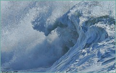 Churning 2 (AJVaughn.com) Tags: ocean flowers seagulls beach water birds alan temple photography james surf pacific surfer board wave lajolla pelican surfboard pacificbeach vaughn cailfornia alanjames dirfing ajvaughn alanjvaughn