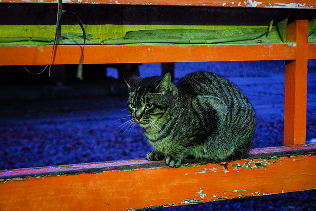 Today's Cat@2015-01-30